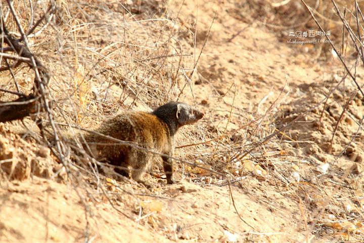 还有很多可爱的小动物.鸟巢悬挂在树枝上,主要是为了防蛇