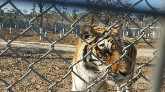 五龙山动物园图片
