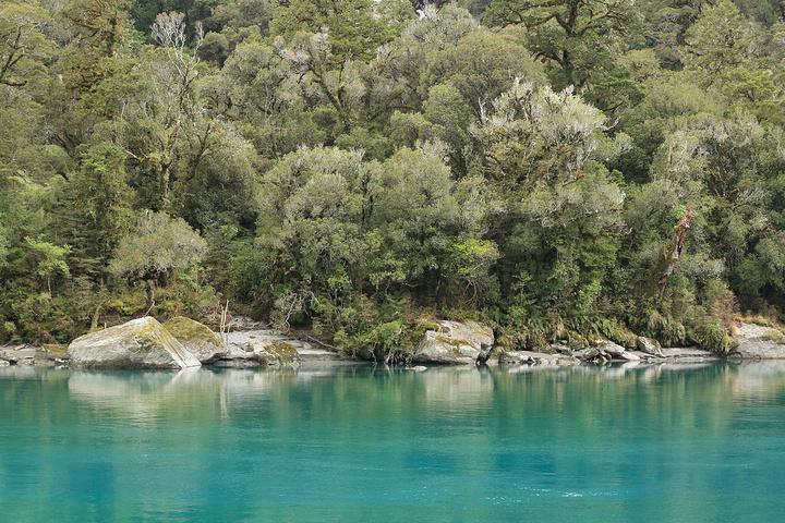 """离开海边,进入了阿斯派灵山国家公园路段。我们走了一个徒步道""""Roaring billy falls walk"""",来回25分钟, 新西兰有无数这样的徒步道,我们选了这个短的体验了一把。很美,热带雨林的感觉,树木都覆盖满了苔藓植物,被砍断的树杆随意丢弃在路边,已布满岁月的痕迹,粗的直径目测1米以上,穿过树林,迎接我们的是一条干枯的河床,跨过河床,是一条透明如纯净水的河水,对面山崖上一条瀑布,是枯水期,瀑布虽小,但能感受到丰水期的飞泻直下。回到徒步道,一对外国夫妻带着一个2岁的小孩在椅子"""