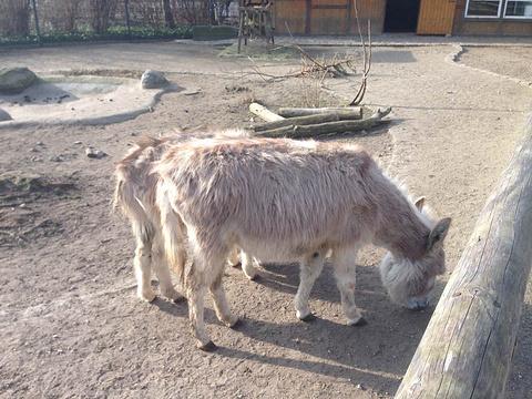 动物 羚羊 480_360