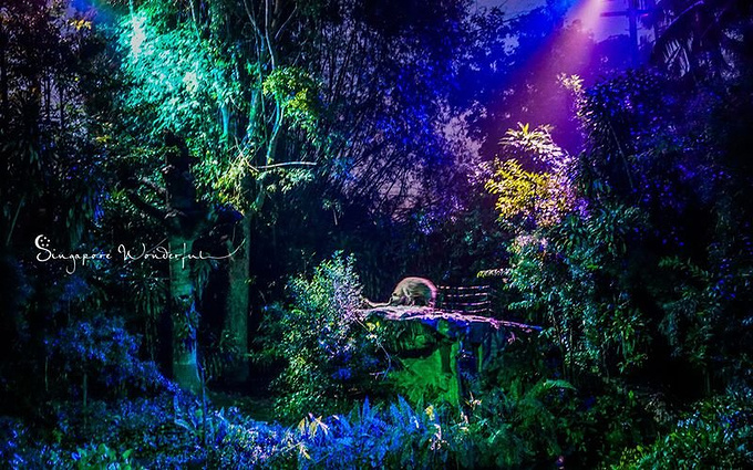 新加坡夜间野生动物园图片