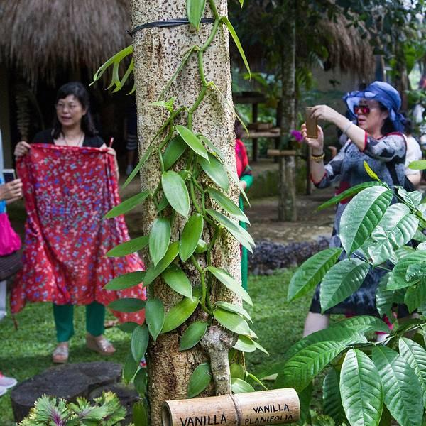2019猫屎工厂工厂咖啡,巴厘岛猫屎咖啡攻略美西北自驾旅游攻略7天图片
