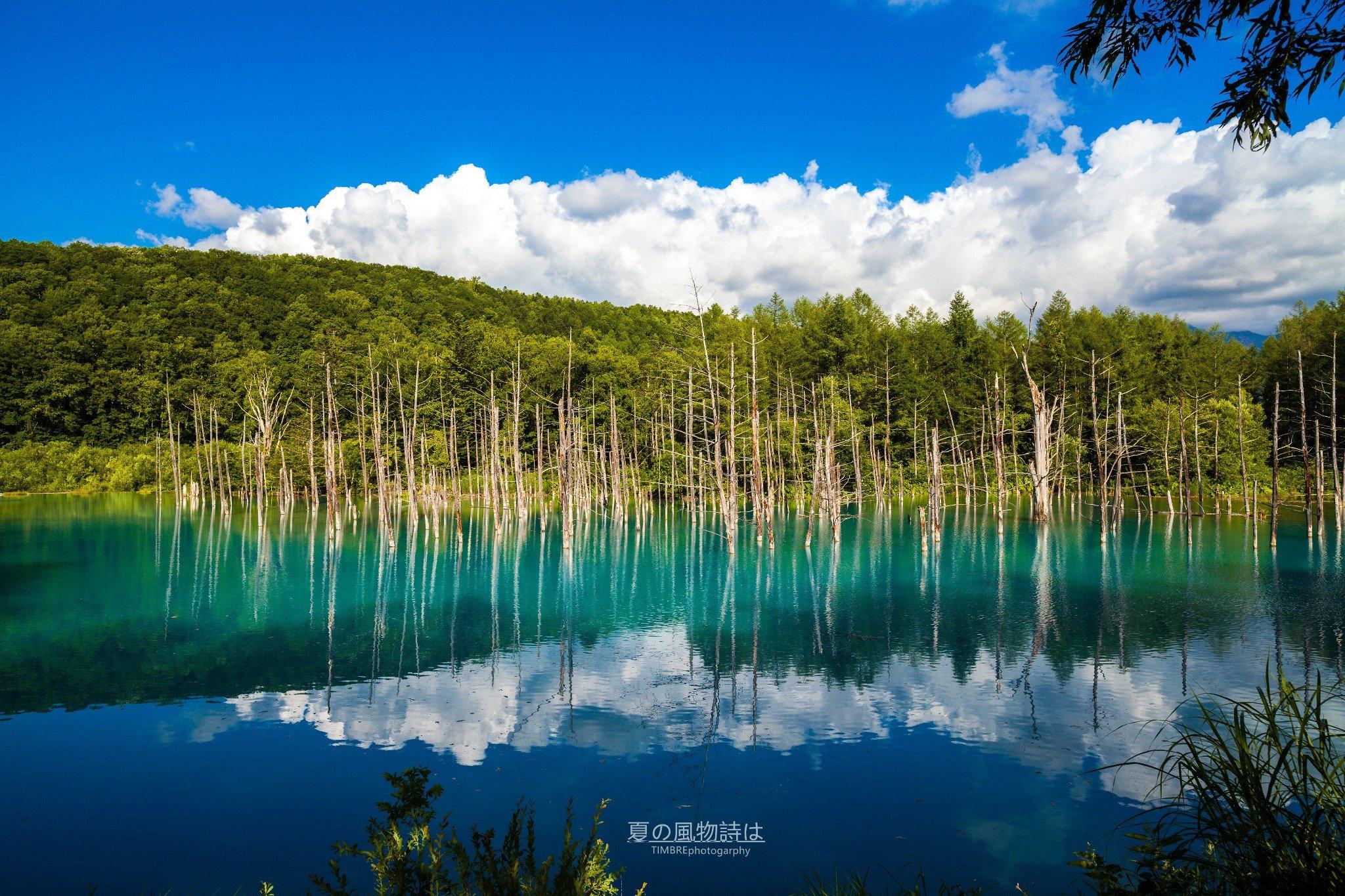 【北海道】東瀛魅惑の•夏の風物詩は