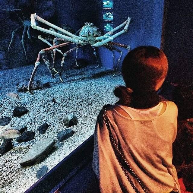 很多各种可爱的动物,去了那麼多水族馆,这个绝对是排名前三的.