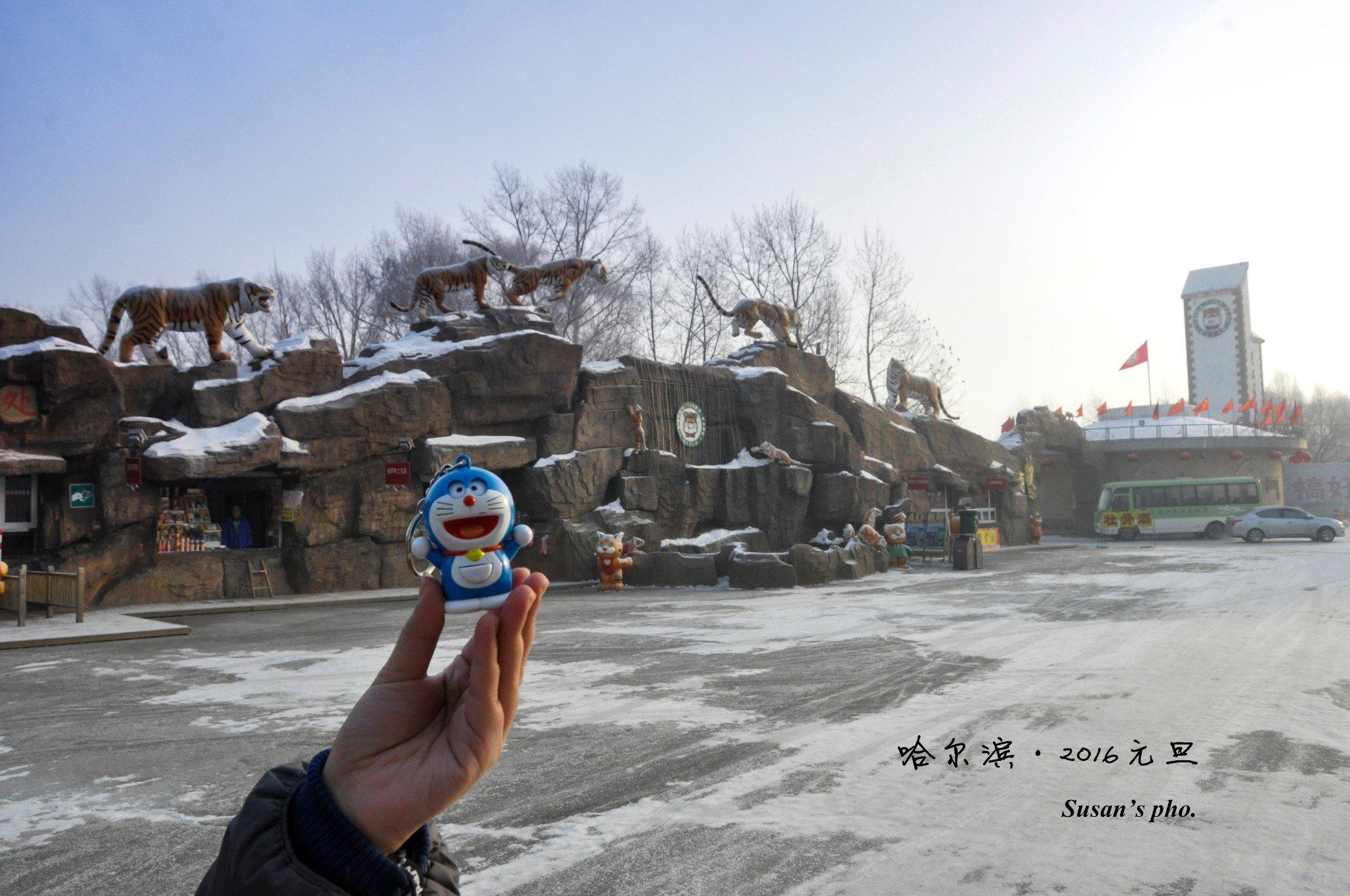 #带着蓝胖子去旅行#2016年元旦,吃货的挨冻之旅——【遇见】哈尔滨
