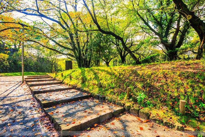 2019每逢春天,赏花的游客络绎不绝,非常热闹.四季自然