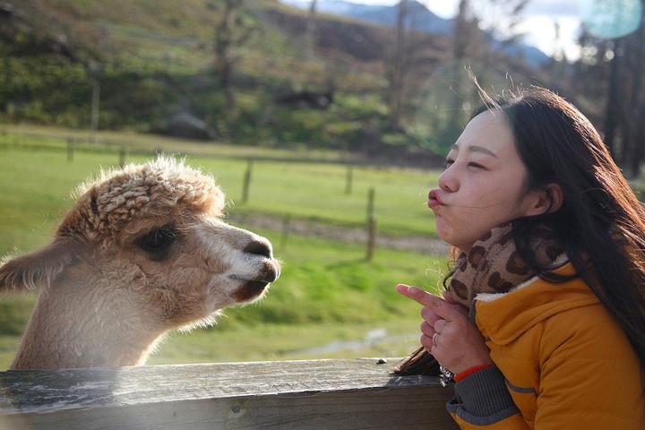 我们预定活动的时候只知道是参观牧场,完全没留意除了喂小动物还有