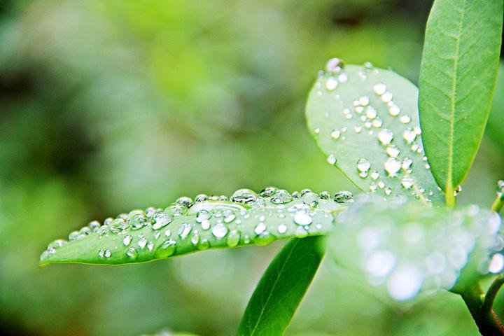 绿,自然界最美的色彩.图片