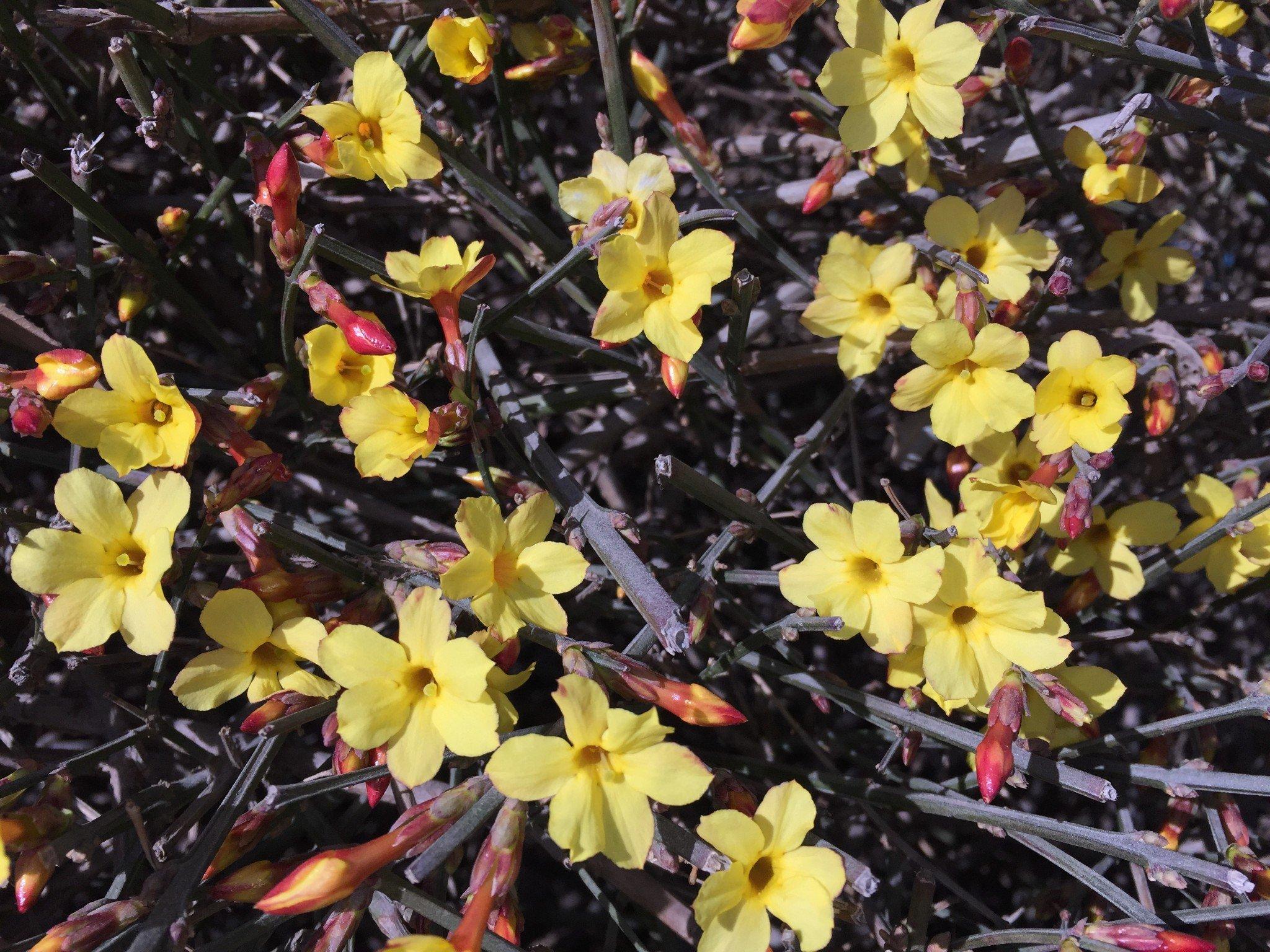 京三四月份常见的花,给旅行中的您一个小汇总,增加点植物常