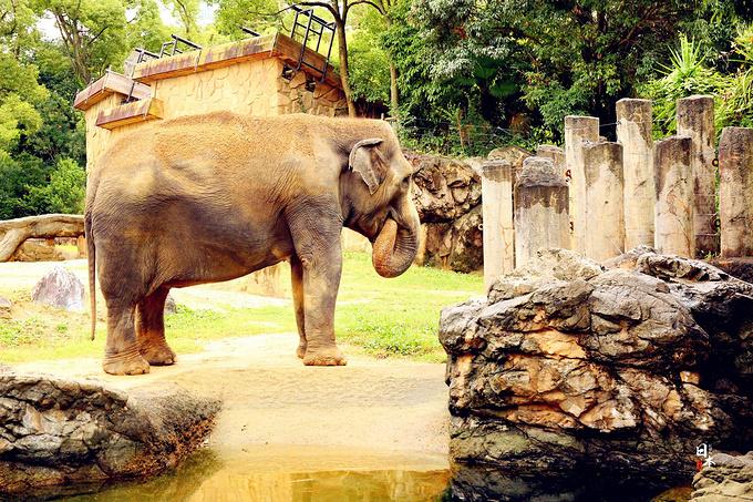 天王寺动物园图片