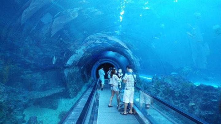 并以浅海至深海方式介绍各式珊瑚的「珊瑚王国馆」,最特别的是那长达图片