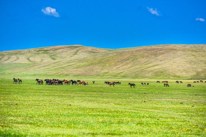 之所以推荐内蒙古大草原除了优美的自然风光之外,还有人少景美的优势