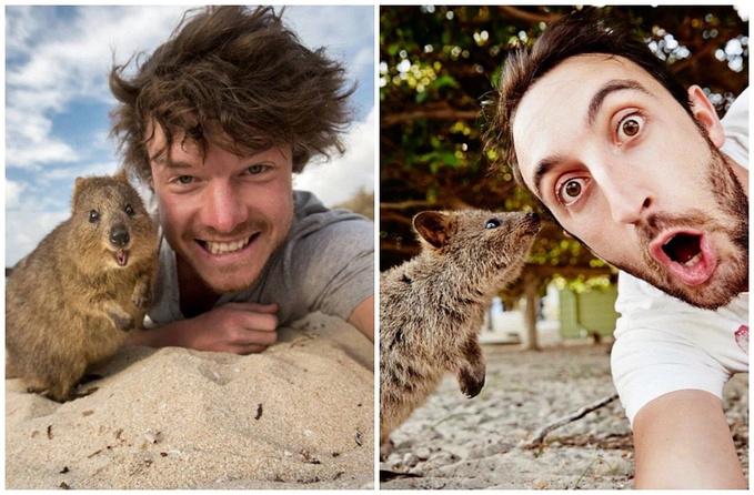 莫名热衷于和动物合影的我,来到西澳,怎么能不去寻找传说中自带表情包