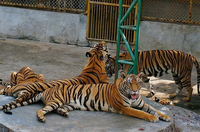 律实动物园图片