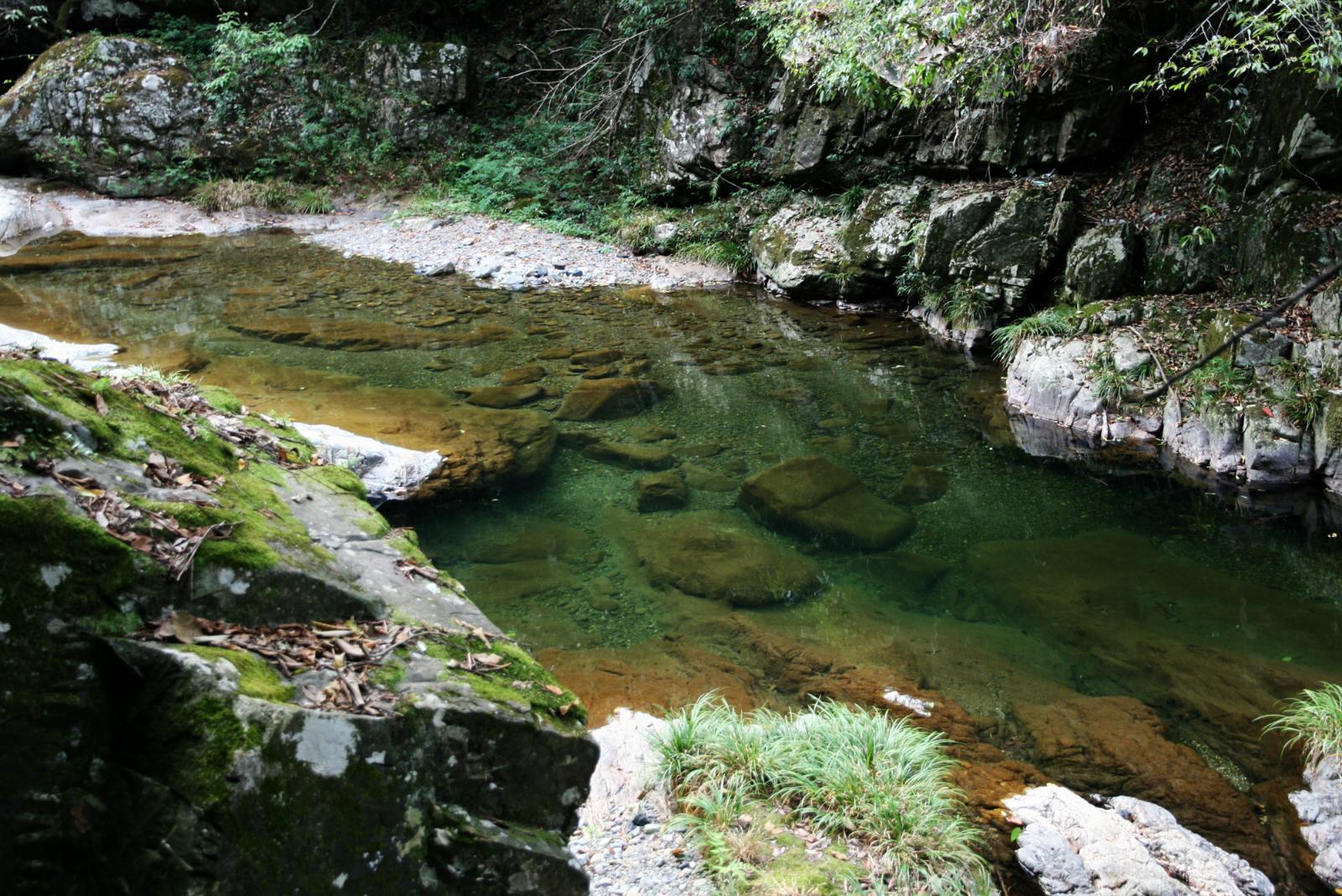 小溪原始森林景观,神秘诱人