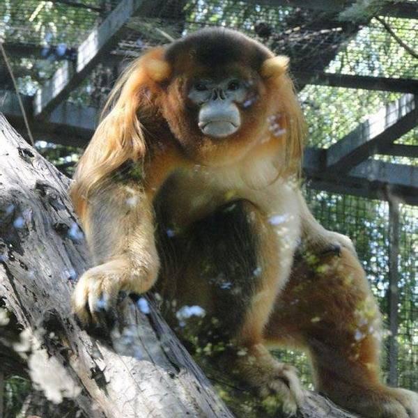 那不勒斯动物园旅游攻略