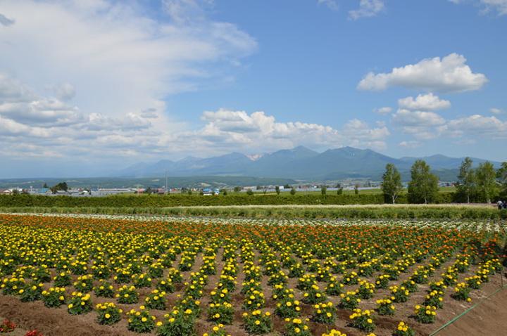壁紙 成片種植 風景 植物 種植基地 桌面 720_478