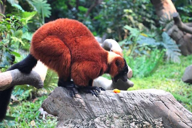 """长隆野生动物世界的动物玩具""""小白虎"""",被列为是广州十大手信之一."""