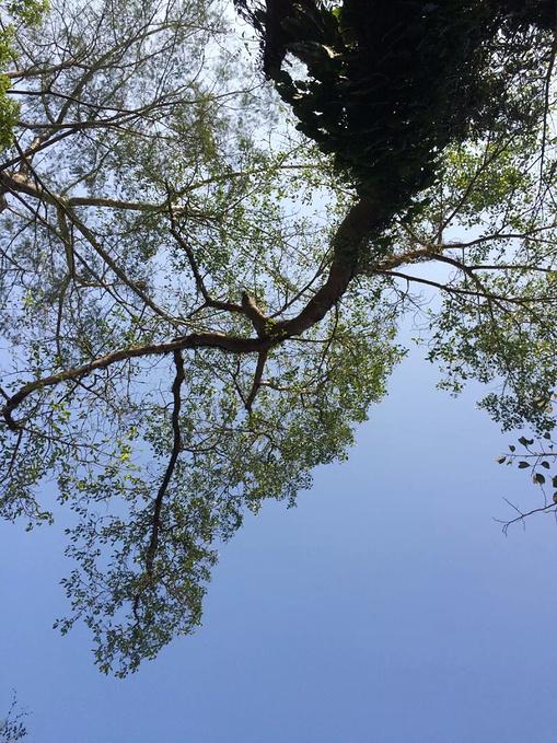 七彩手绘热带叶子
