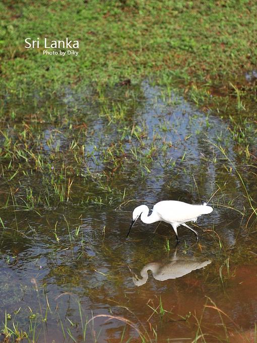 亚拉国家野生动物森林公园图片