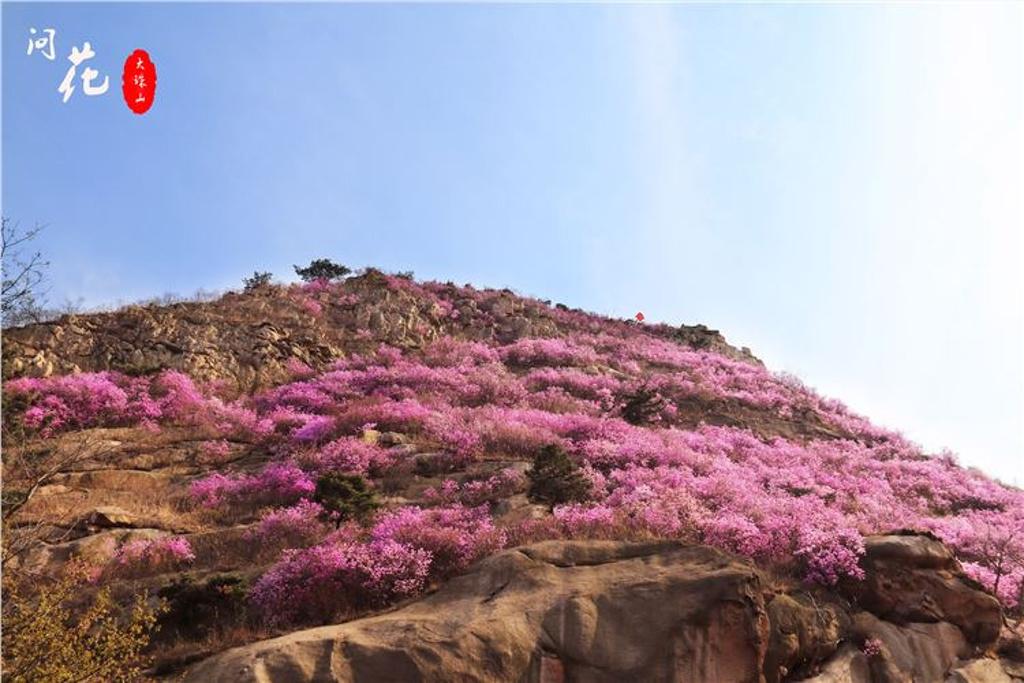 青岛:杜康尚饮花间酒,鹃声未闻春满山