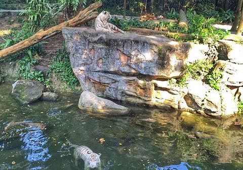 2018河川动物园_旅游攻略_门票_地址_游记点评,新加坡