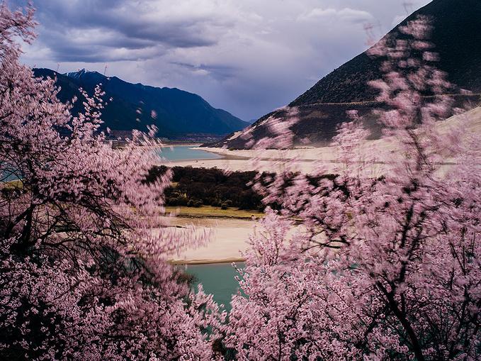 最美风景图片 桃花