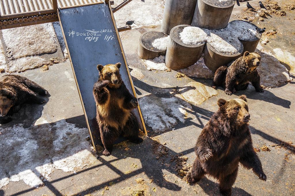 2015门票新山熊地址_旅游攻略_国庆_攻略_游2014北京牧场旅游昭和图片