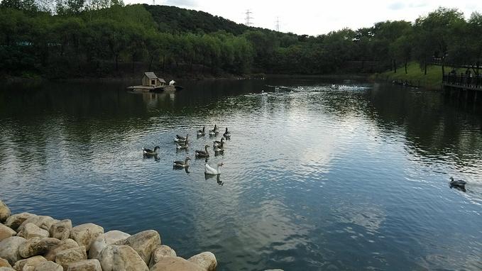 沈阳森林动物园图片