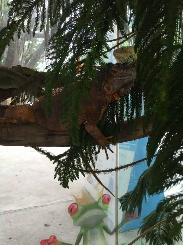 没想到来看鳄鱼之余还能观赏到那么多其它有趣的动物,绝对值得一游啊!