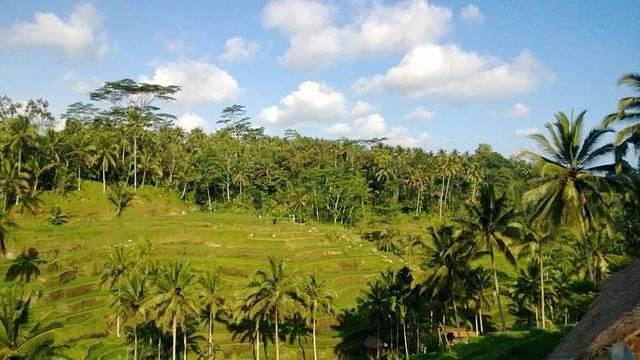 点评(27 条) 德格拉朗梯田编辑是巴厘岛著名的梯田风光,在这里你会