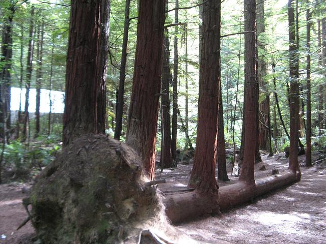 """""""罗托鲁瓦丰富的地热资源_红木森林公园""""的评论图片"""