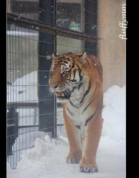 旭山动物园图片