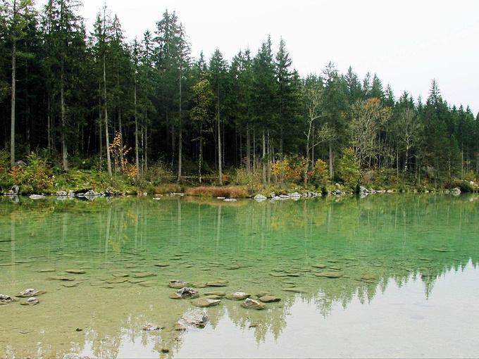 魔法森林图片