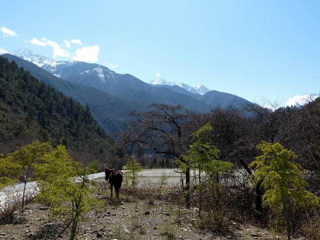 整个木格措风景区以高山湖泊及温泉为主要特色,融原始森林,草原,雪山