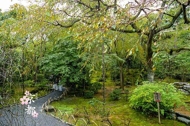 旁边还有几株被风吹落了叶子的枫树,寒风中一片金黄在枝头打着转,岌岌
