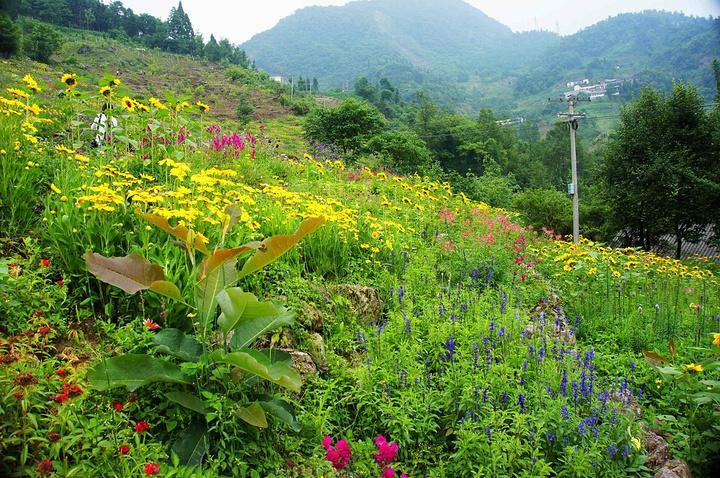 喜目花谷最美的季节是春天,虽然这次来我们错过了百花盛开的春日景色