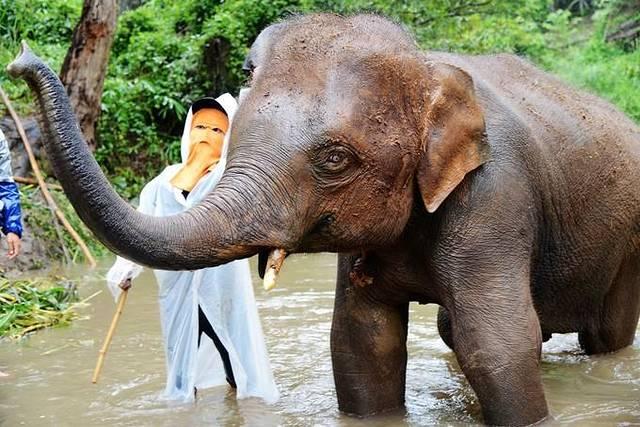 泰国动物篇(四) 牛很悠闲. 我一直在旁边逗它玩,它很瘦.