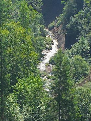 """""""松树和桦树的根长到了一起, 很特别_长白山大峡谷""""的评论图片"""
