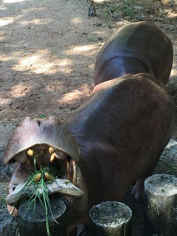 下午游览了全泰最大的动物园——占地面积大,不是动物最多.天气不错