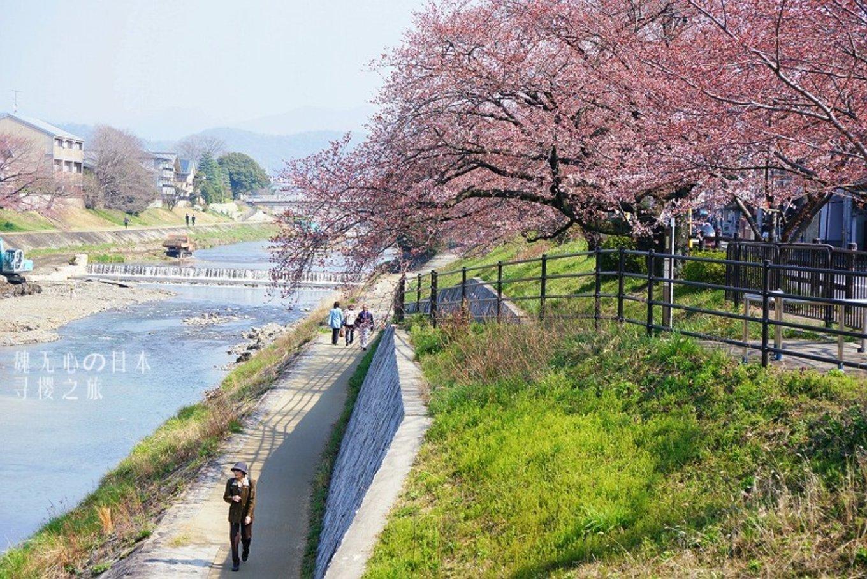 三月日本,最美樱花记