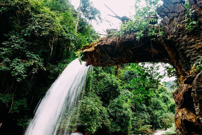 石上森林图片图片