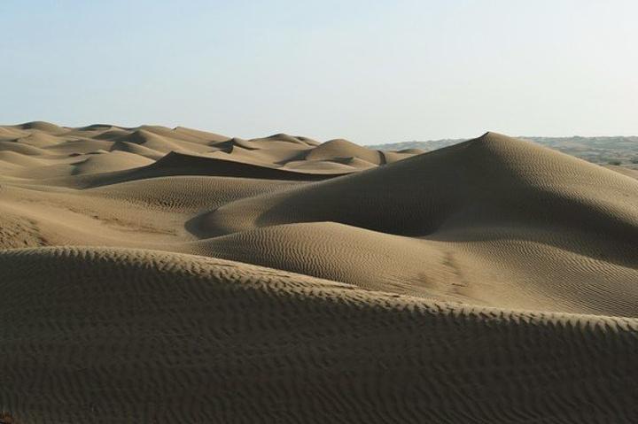 沙漠中各种小动物的足迹