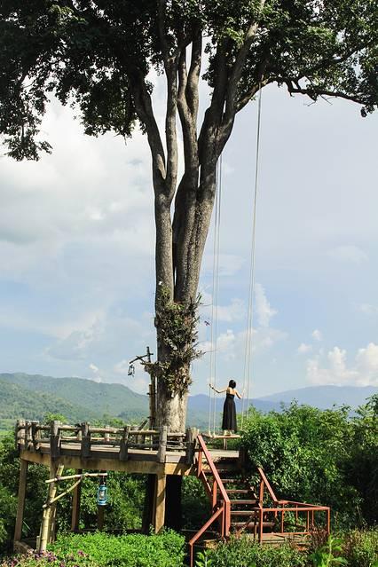 一颗面对山谷的大树,从几十米高的树枝上垂下两根绳子,连成秋千,人坐