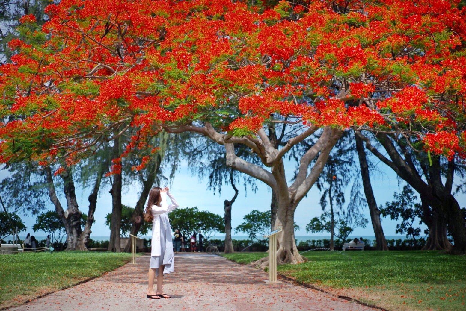 国人的后花园之泰国
