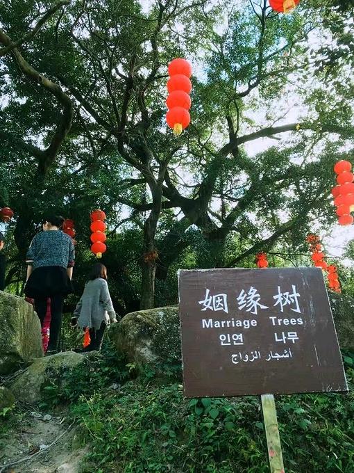 广东求姻缘灵寺庙 供奉37.3公斤纯金观音像 价值1300万!   乱码