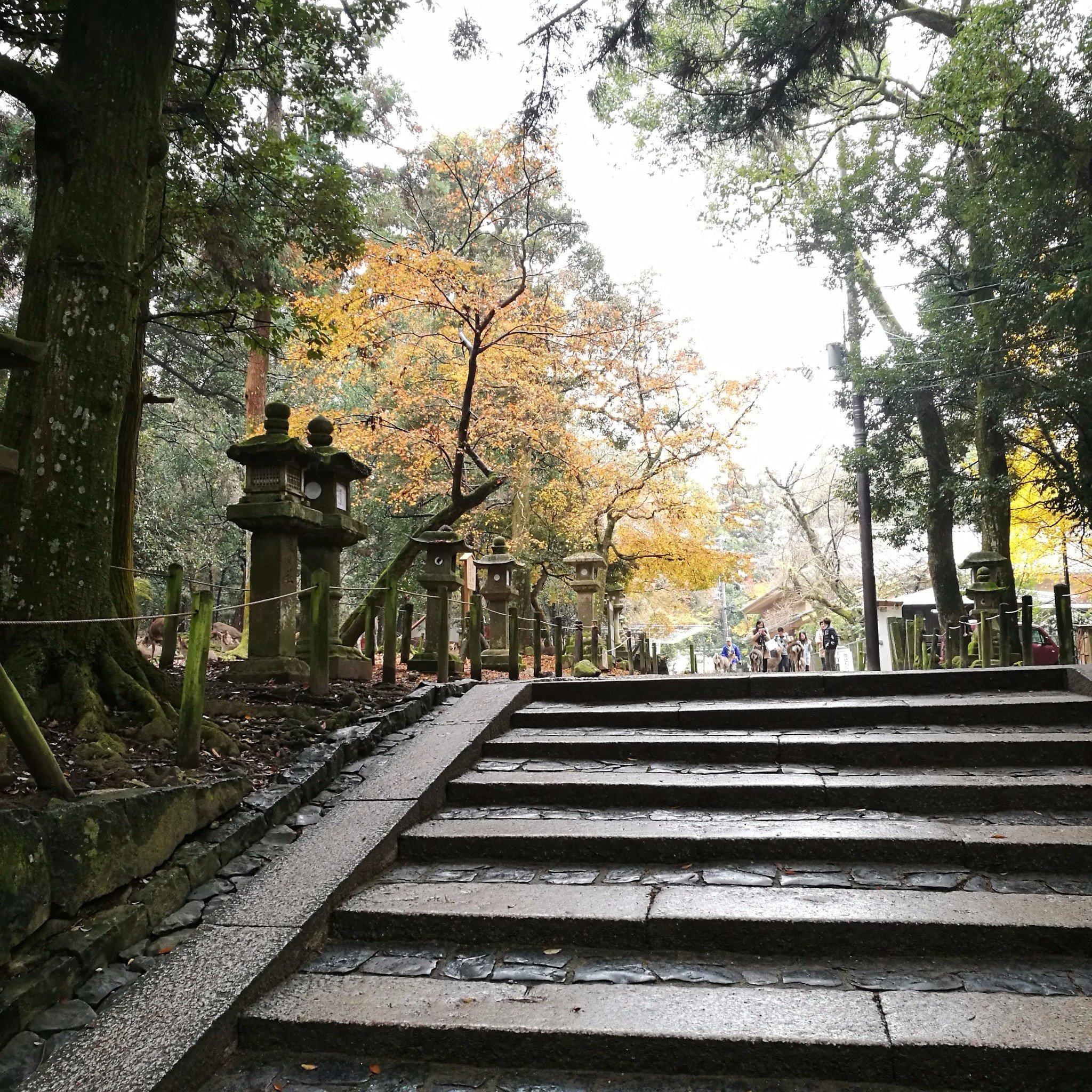 追赶日本关西的秋