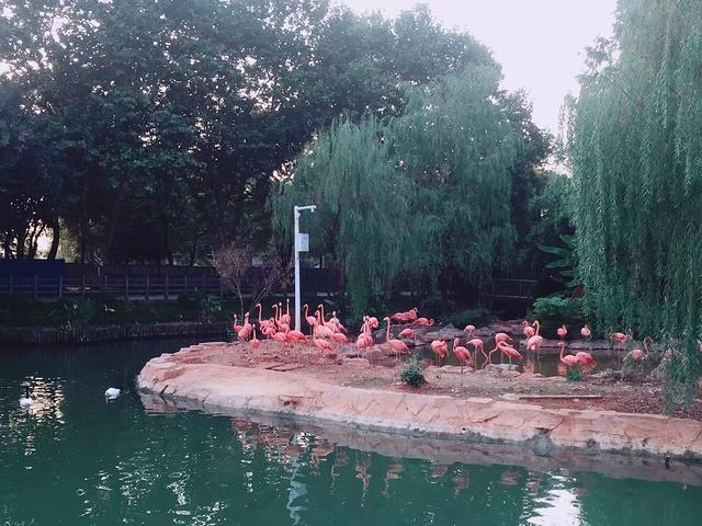 """优惠票:每人10元_武汉动物园""""的评论图片"""