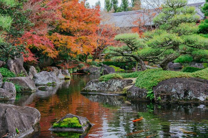 轩餐厅便是好古园的中心庭院,道路围绕着中心的鱼池,鱼池中有山石瀑布图片