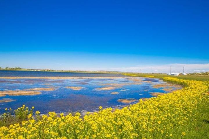 扎格斯台淖尔湖水为淡水,湖底为沙底,水质清澈透明,岸边有不知名的